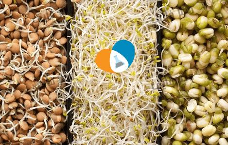 براعم النباتات : ما هي البراعم النباتية؟ وما هي فوائدها العلاجية وأضرارها؟