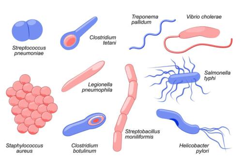 البكتريا
